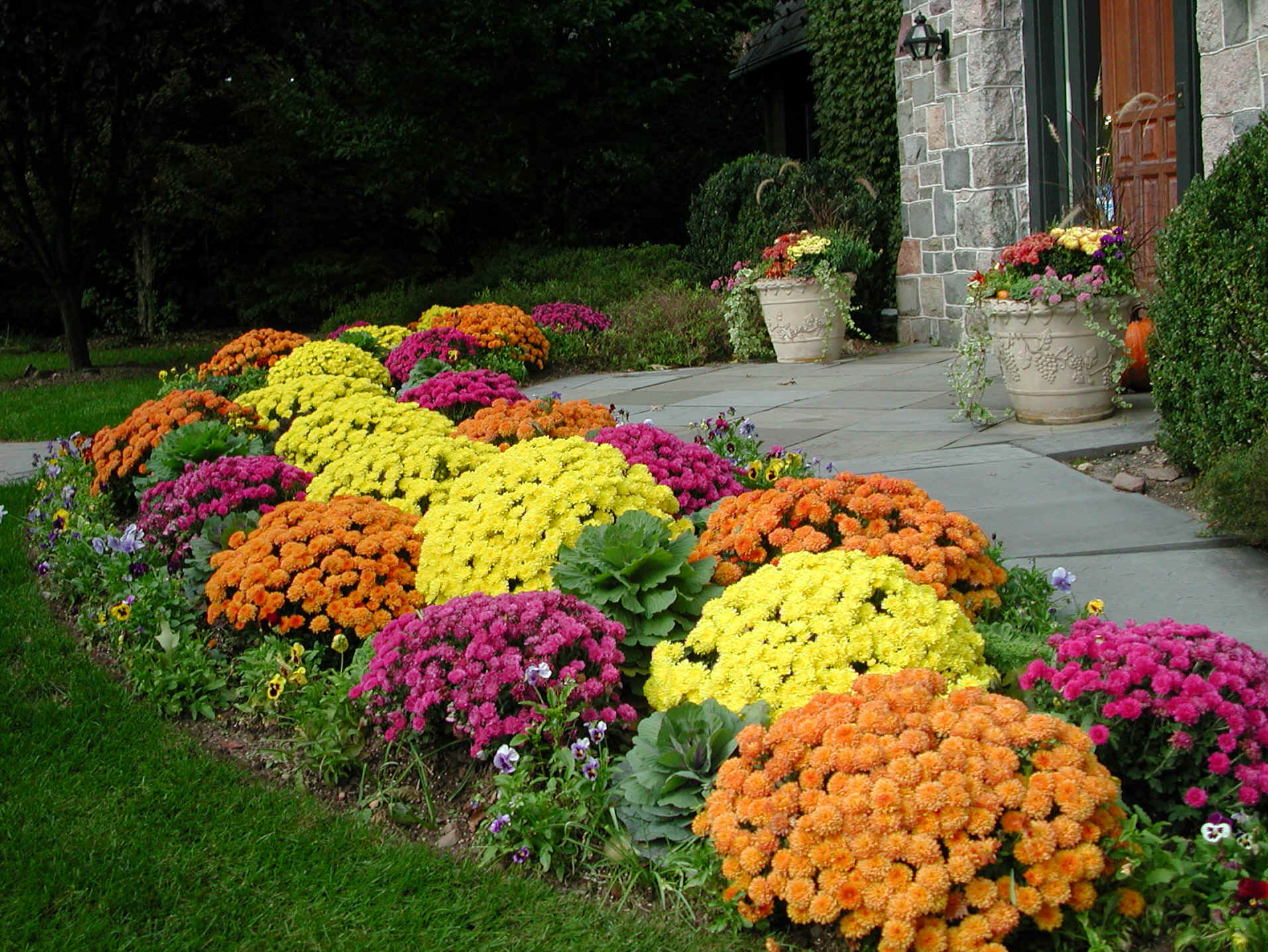 Increasing curb appeal the top 5 flowers for fall for Popular fall flowers